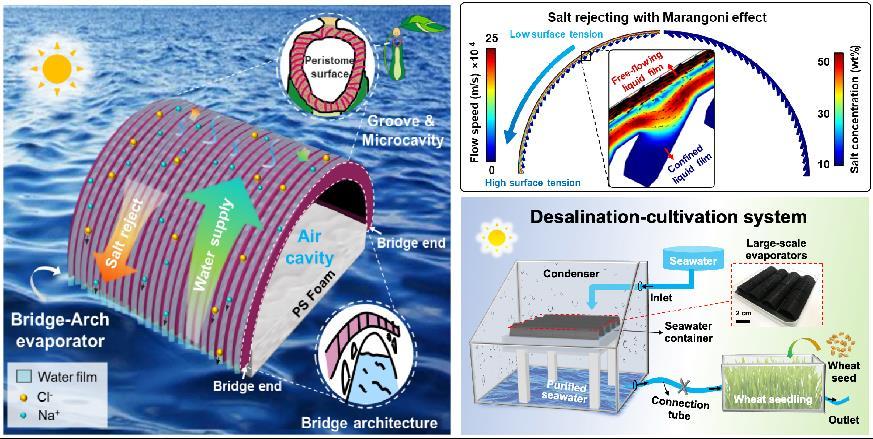 宋延林课题组利用3D打印制备仿生高效排盐太阳能蒸发器并实现农业应用