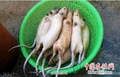 老鼠肉冒充羊肉上餐桌,马肉冒充牛肉,还有病死猪、毒鸡爪