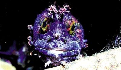 变异鲶鱼令人触目惊心,美丽妖艳的不正常
