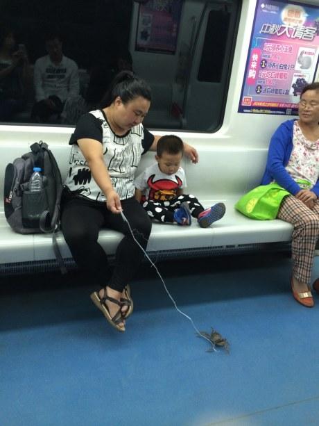 地铁溜螃蟹 这样的宠物很霸气!