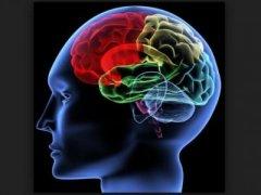 科学家发现 大脑脂肪或有助人类智慧进化