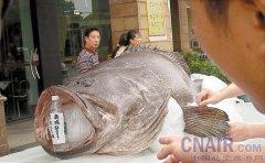 由巨型老鼠吃猫 盘点全世界令人震惊的巨型动物