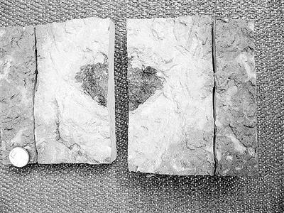瑞典惊现未知陨石 母体或是4.7亿年前的神秘小行星