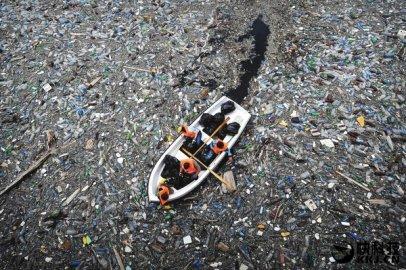不开玩笑!科学家发现这虫子消化塑料!竟能拯救环境