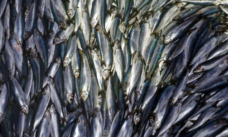 如果气温继续变暖,海洋可能会损失大约六分之一的鱼类和其他海洋生物