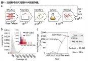 中国研究人员:细菌细胞的混合培养可实现经济的DNA大规模存储